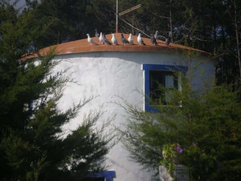 moinho, vacation rental in Nazare