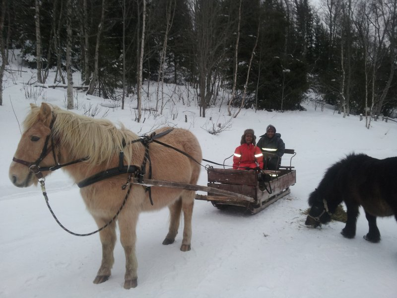 Our guests can visit the two horses at the farm, Felix and Frøya