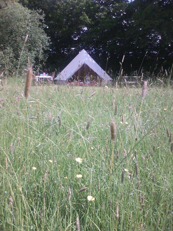 Beautiful setting in meadow