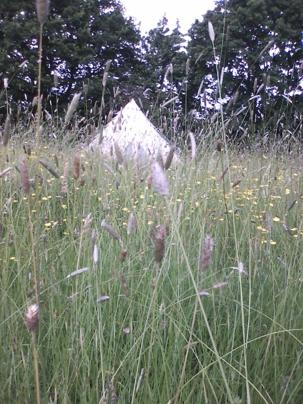 Set in grassland and wild flowers.