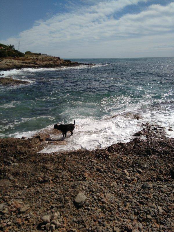 Cala Ordi, Medelhavet!