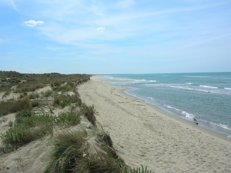 Free public beach in Ostia called Castel Porziano and its sand dunes.