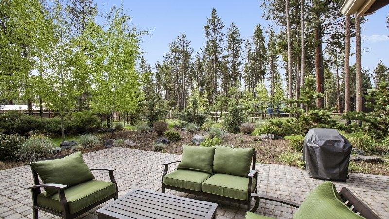 Chair,Furniture,Fir,Tree,Yard