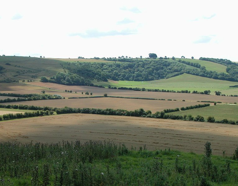 The South Wiltshire Downs, part of an Area Of Outstanding Natural Beauty