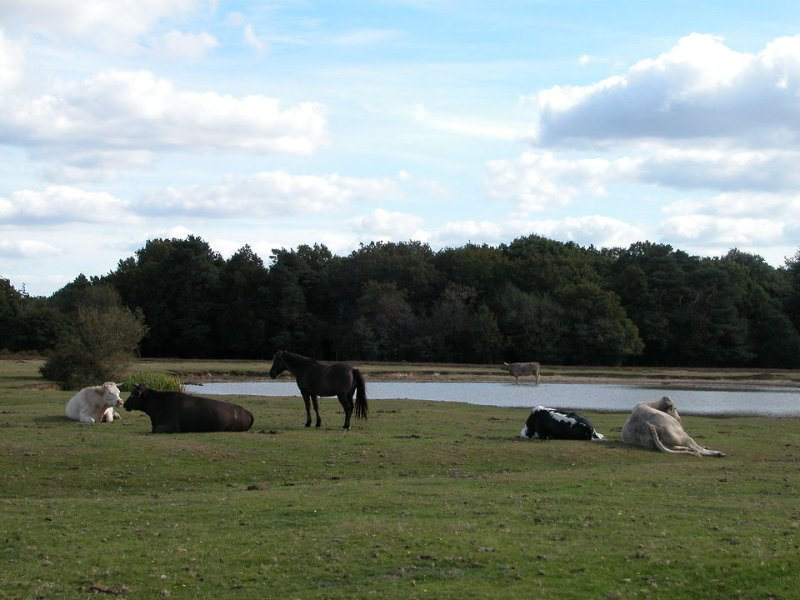 A New Forest watering hole near Bramshaw