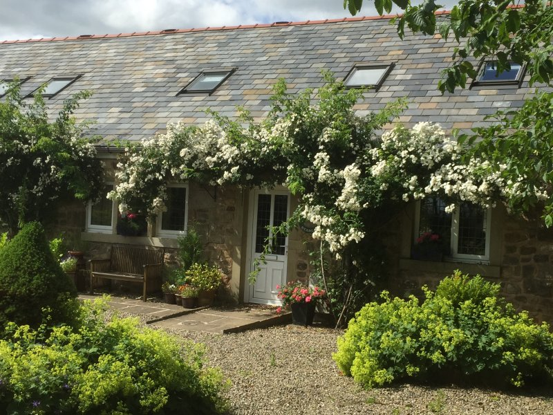 5* Gold, lovely rambling rose covered 6 bedroomed cottage sleeps 13, huge private garden