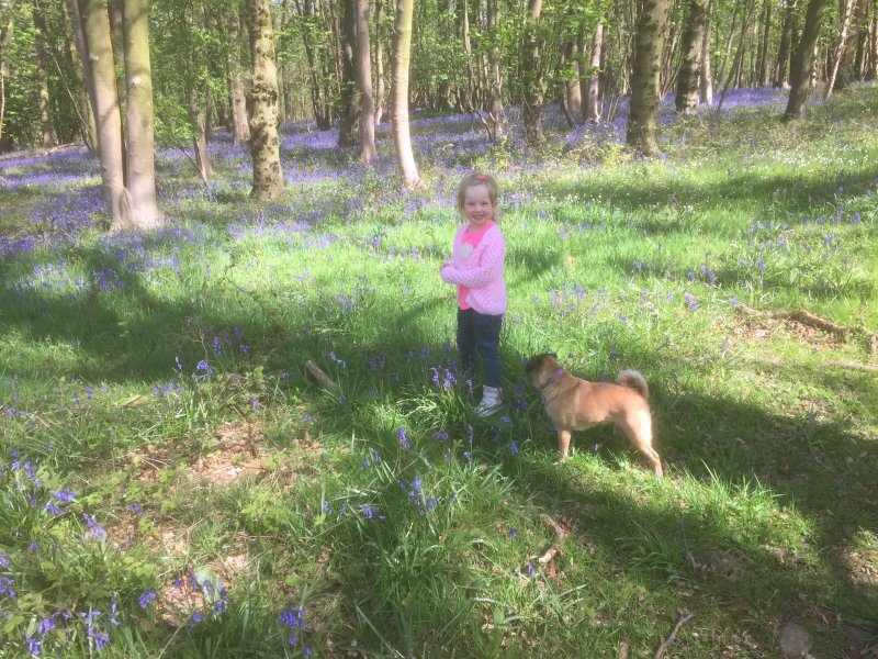 Enjoy great walks in our surrounding bluebell woods at springtime.