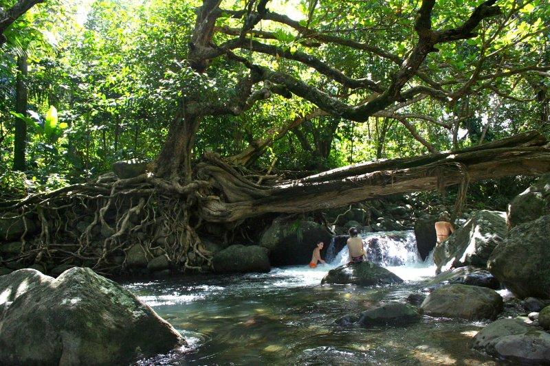 Banyan stone tree house, vakantiewoning in Saint Patrick Parish