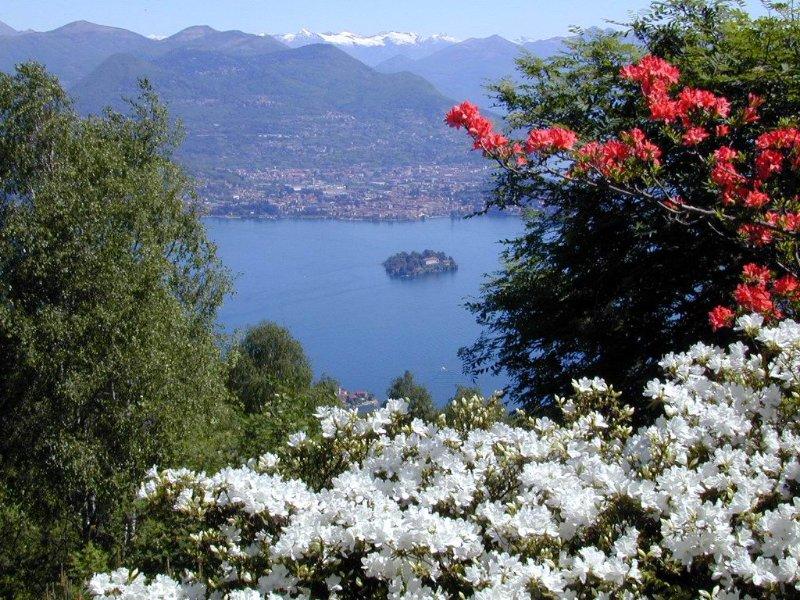 view from Alpinia garden