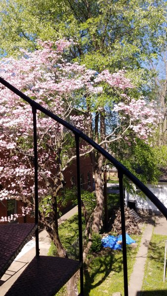 A look out the back door in Spring.