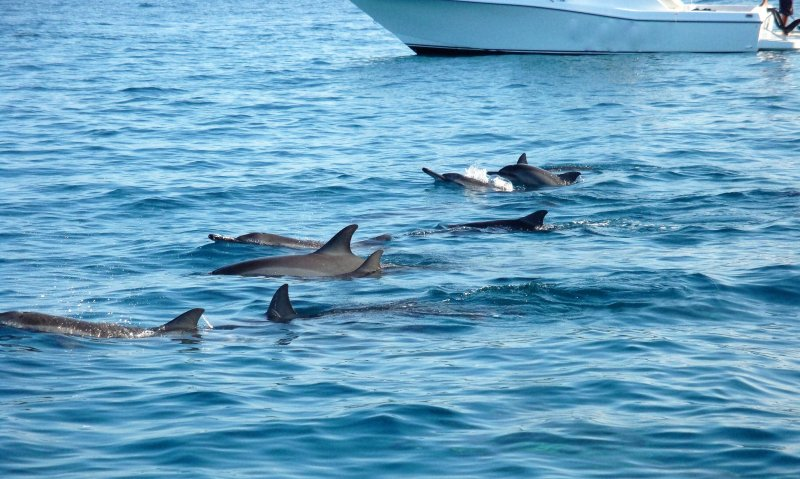 Let us arrange a swim with wild dolphins Large populations of dolphins visit this coastline daily