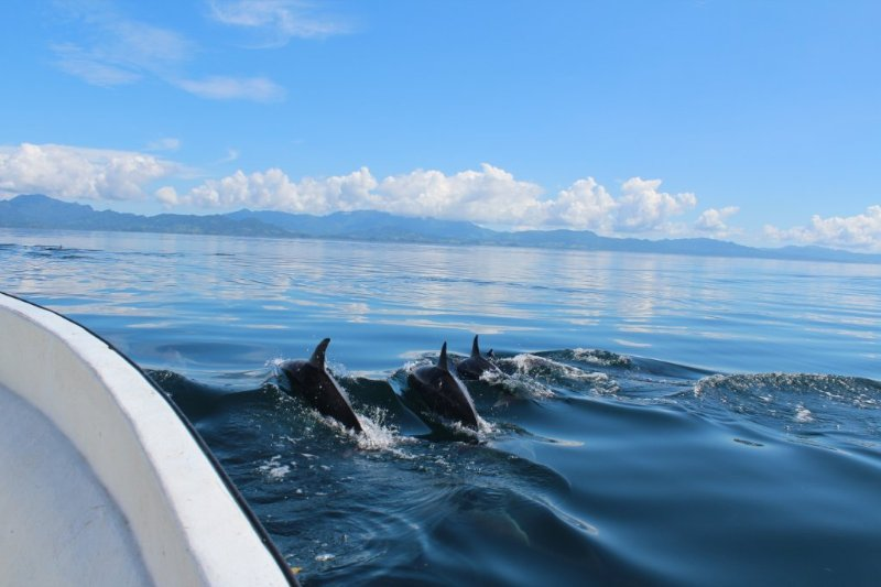 visit the dolphins...