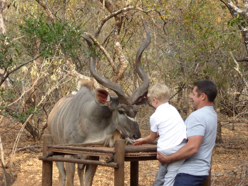 Feeding a kudu by hand...how amazing is that!