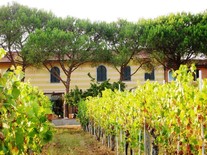 Casa Vacanza tra le vigne, holiday rental in Luciani
