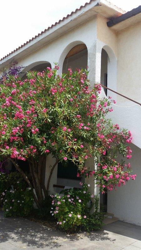 Home of the oleander - Santa Caterina