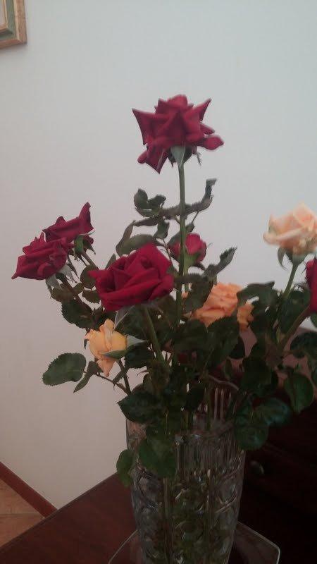 Jeden Tag kommen neue Rosen.