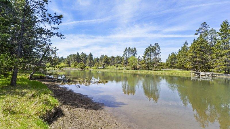 Im Freien, Teich, Wasser, Fluss, Tanne