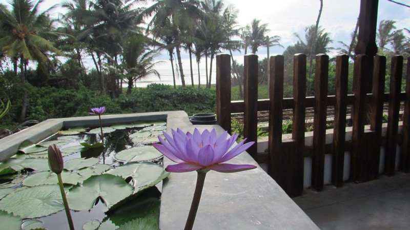 Every morning you will be greeted by water lily's.