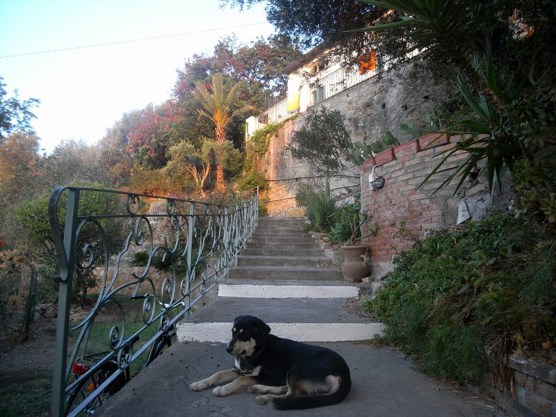 The main stairs leading to the house, with our Natalino waiting for guests