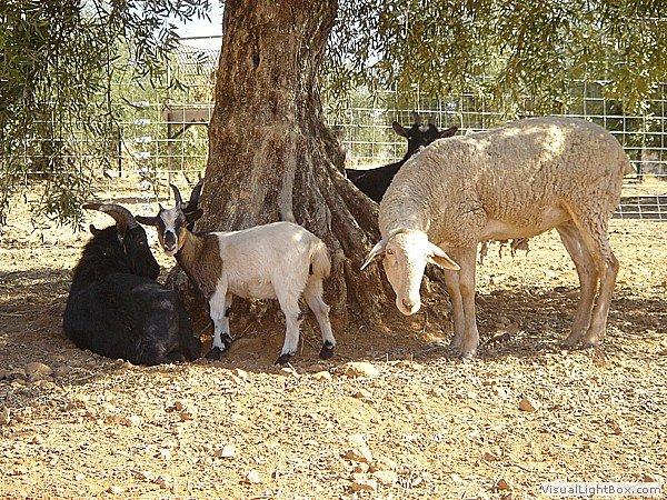 Vista parcial de animales domésticos de mini-granja