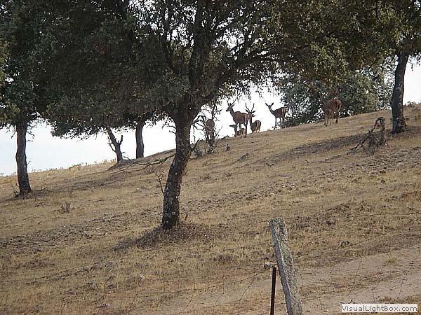 Entorno del alojamiento: Sierra Morena (Parque Natural Cardeña-Montoro) con vista al fondo de ciervo