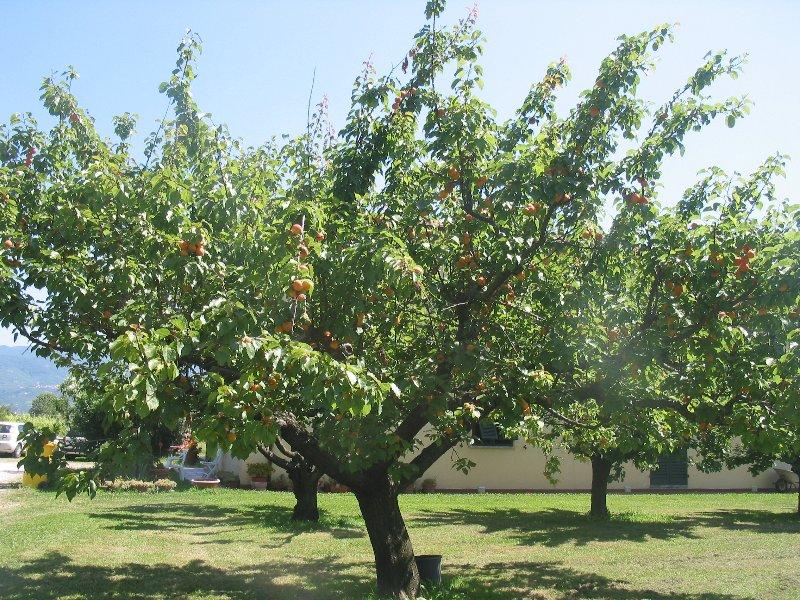 Il frutteto intorno a casa