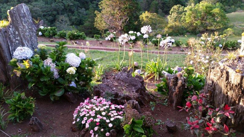 Une partie des fleurs de jardin