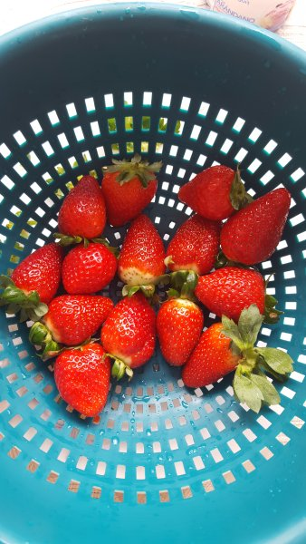 les fraises sont une production locale ici