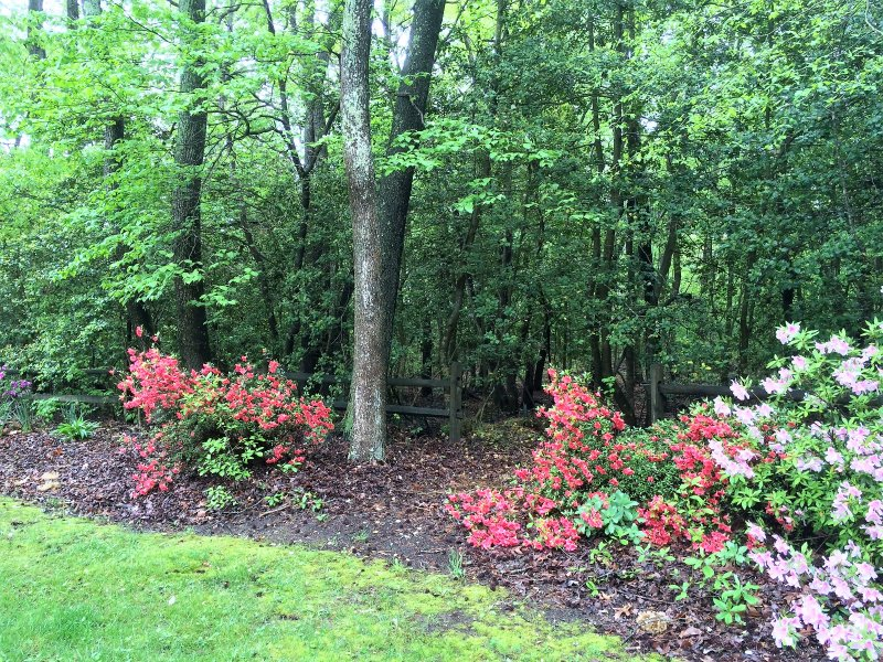 Flora and Woods on the property