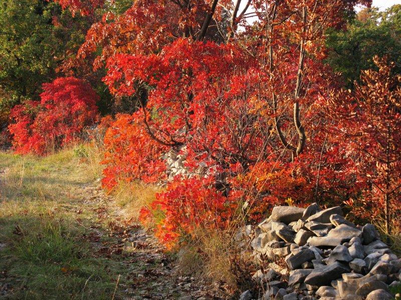 Herfst in Karst