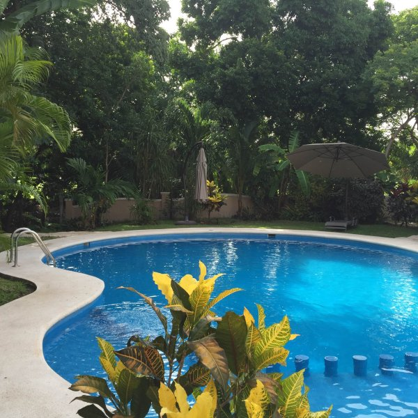 Swimming pool shared with other guests