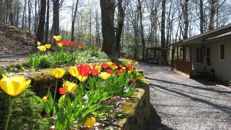 Tulipanes en la floración en Bella Vista - Abril
