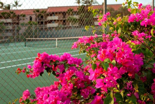Garden,Vegetation,Flower,Yard