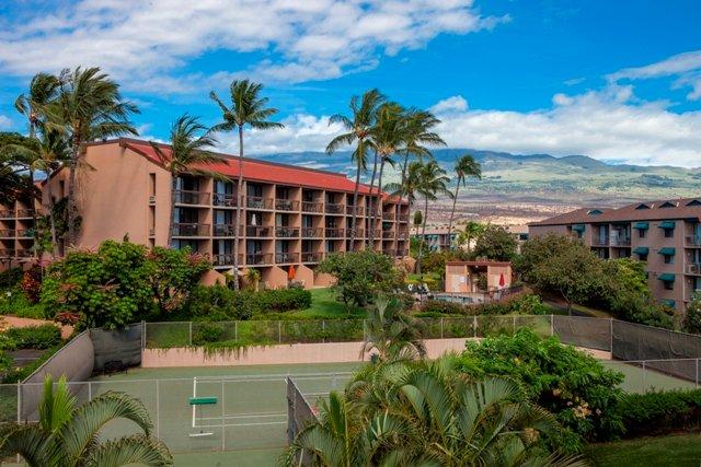 Palm Tree,Tree,Building,Villa,Hotel