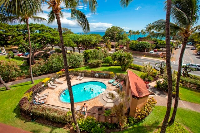 Palm Tree,Tree,Tropical,Yard,Pool