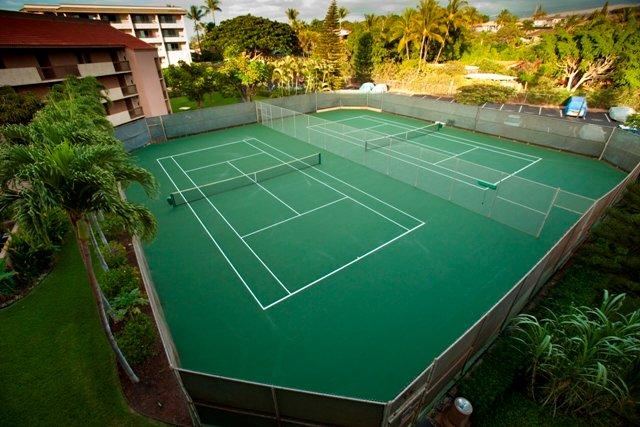 Tennis Court,Building,High Rise,Fir,Tree