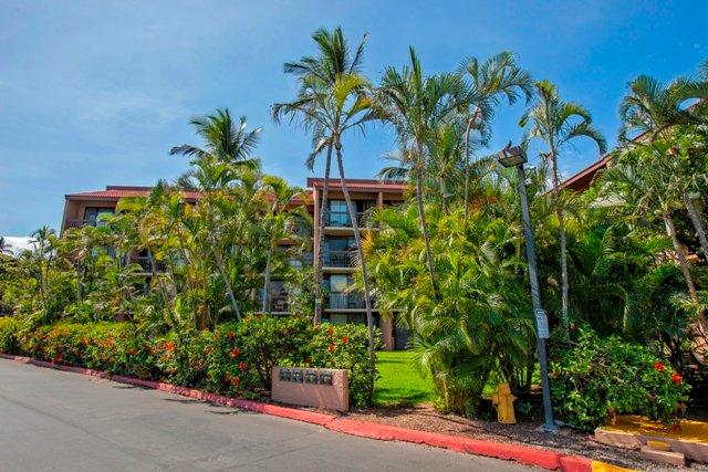 Building,Palm Tree,Tree,Villa,Vegetation