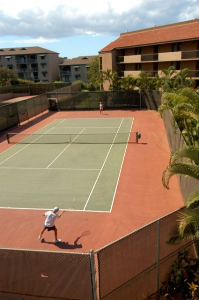 Tennis Court,Palm Tree,Tree,Field,Planter