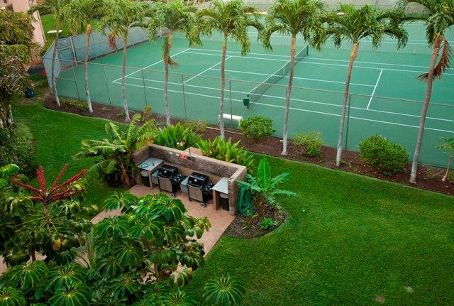 Garden,Yard,Palm Tree,Tree,Planter