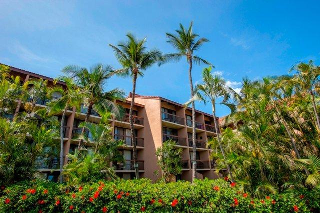 Palm Tree,Tree,Building,Villa,High Rise