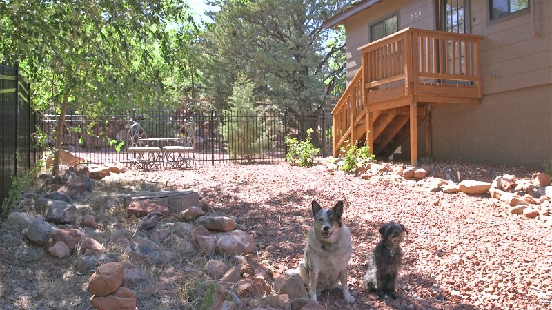 Pet friendly with large dog run for safety