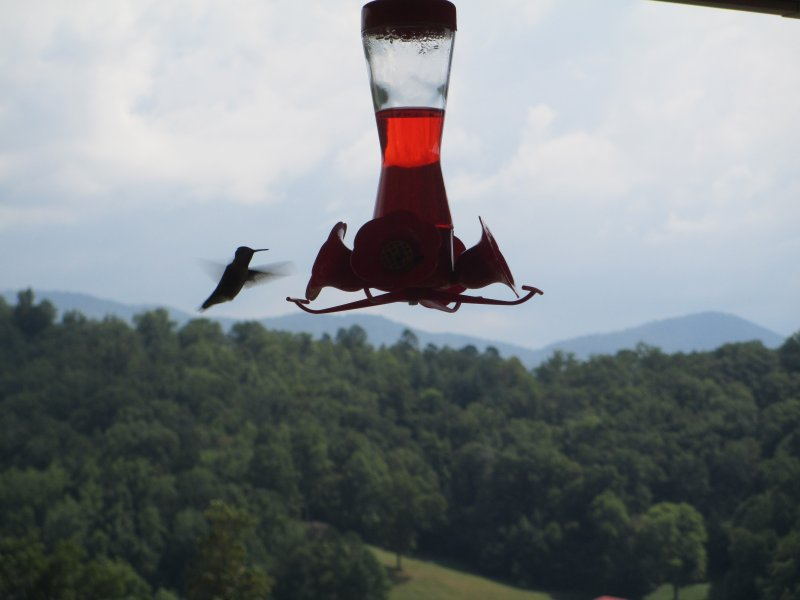 In the summer, a pair of hummingbirds entertain frequently just off the porch!