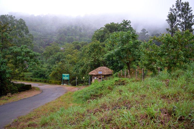 Viripara cae y el departamento forestal senderismo sendero hacia la ciudad de Munnar a los 5 minutos en coche
