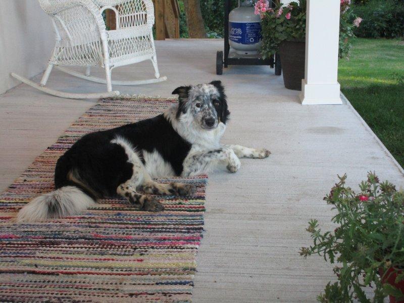 A casa de quinta aceita animais de estimação. Eles vão adorar o espaço para correr e brincar.