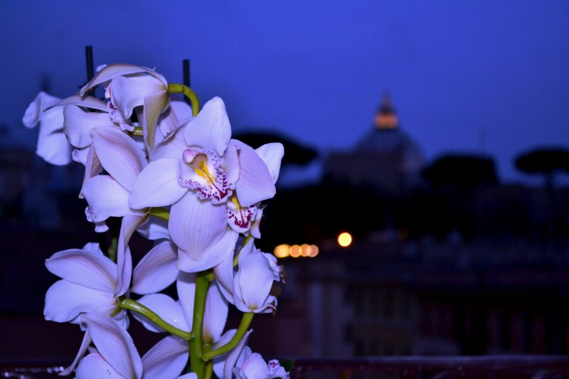 Notti al Vaticano-Deluxe St.Peter's Accommodation', holiday rental in Vatican City