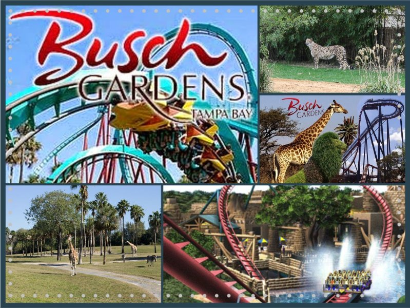 Busch Gardens Tampa has something for every member of the family.