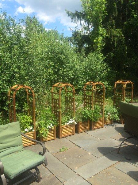 Patio giardino per i clienti con pomodoro, basilico, peperoni, menta, Stevia. Prezzemolo, timo, salvia, e altro ancora