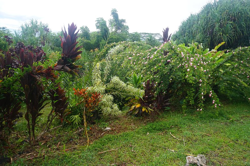 jardines alrededor de la casa