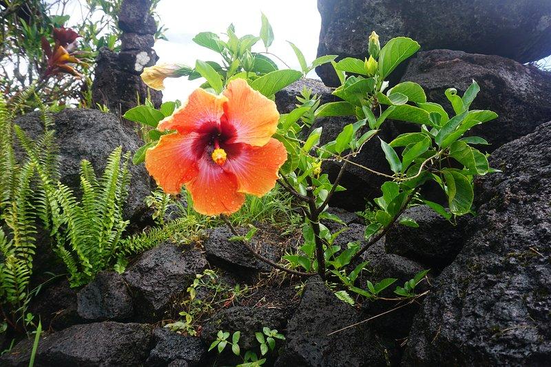 flor de hibisco desde el patio