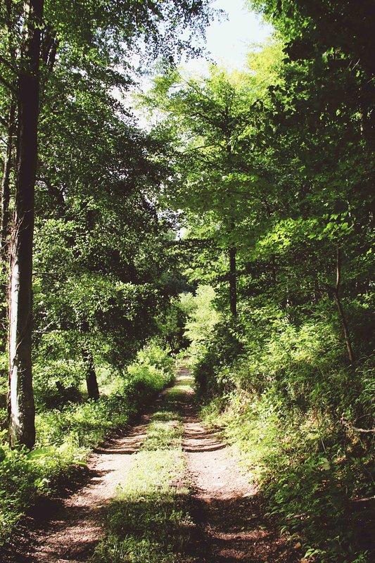 Viele einsame Spaziergänge im Tal Owlpen